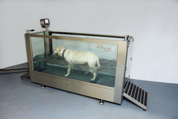Hydrotherapie-honden-Oost vlaanderen-antwerpen-onderwaterloopband-honden-zwemtherapie-honden-zwembad-honden